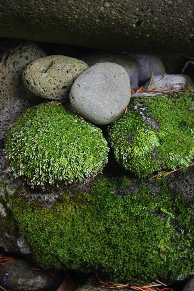 Mossy Bed